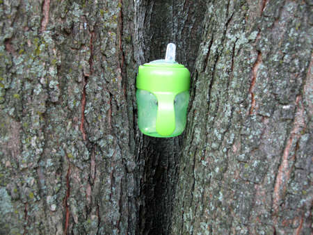 Green baby sippy cup lodged between two trees