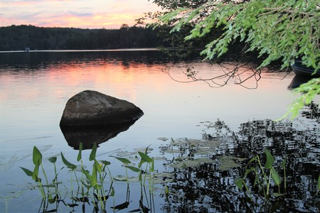 Rock and plants in lake at sunset