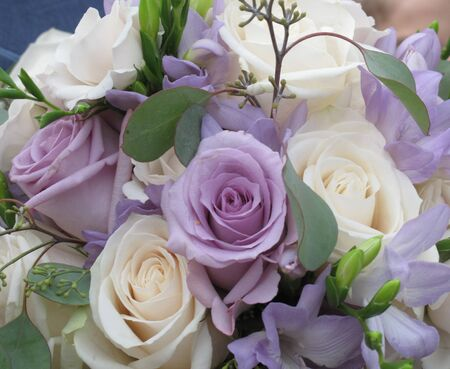 Bouquet of mauve and creamy roses Stock Photo