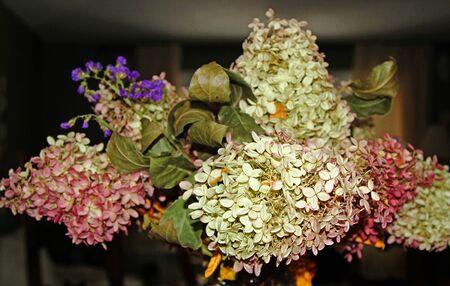 Bouquet of dry hydrangeas in a vase
