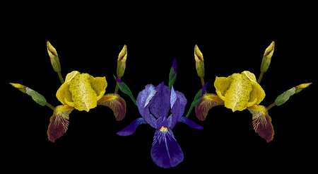 Embroidery fashion design, neckline template with yellow,blue and purple iris stitched pattern vector floral illustration Illustration