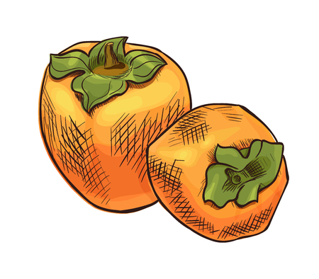 persimmon: Persimmon vector icon, hand drawn sketch of tropical exotic orange fruit, template for menu, diet infographics, sticker, flyer, print