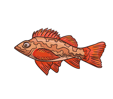 Sea bass vector icon isolated, hand drawn sketch of red sea fish, template for menu, food diet infographics, sticker, flyer, print