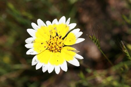 Wild Flower  Foto de archivo - 6910419