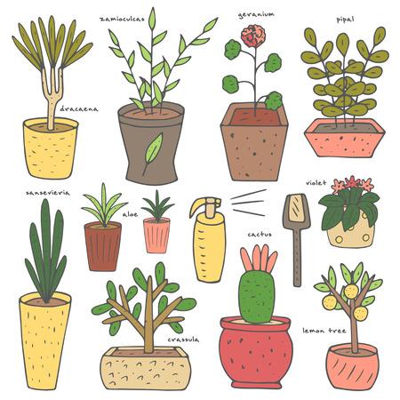 pipal: Cute hand drawn doodle house, office plants collection including aloe, pipal, lemon tree, geranium, violet, dracaena, crassula, zamioculcas, sansevieria.
