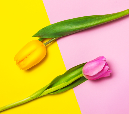 Yellow and pink tulips on yellow and pink background. Imagens
