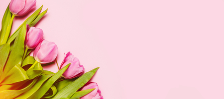 Pink tulips and mimosa flowers on pink trendy background. Spring greetings. Flat lay, top view Imagens