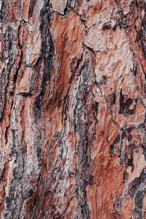 Coral bark texture. Close up, coral color. 写真素材 - 134737911