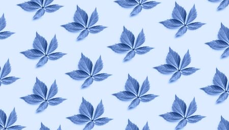 leaf pattern on clasic blue background. Trendy minimal color of 2020 background. Top view, flat lay.