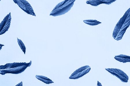Classic blue leaves pattern on blue background. Minimal trendy background. Color of year 2020. Top view, flat lay. Summer creative background. 写真素材