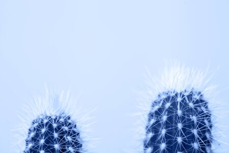 Macro photo of cactus and spines on blue background. Colored in classic blue.