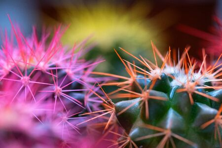 Colorful cactus macro photo. Close up. 写真素材
