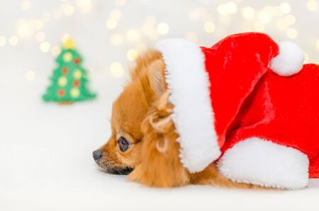small pomeranian in santa costume on christmas bokeh background
