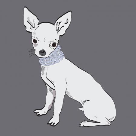 petite: Chihuahua
