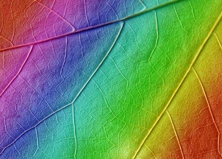 gay flag: multicolored leaf texture as background