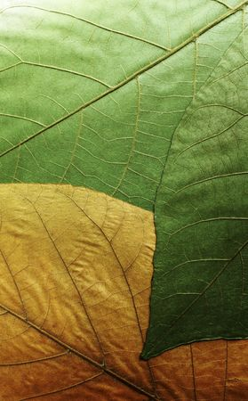 leafage: leafage background Stock Photo