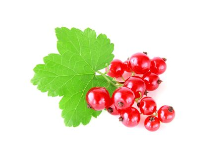 red currants: red currants isolated