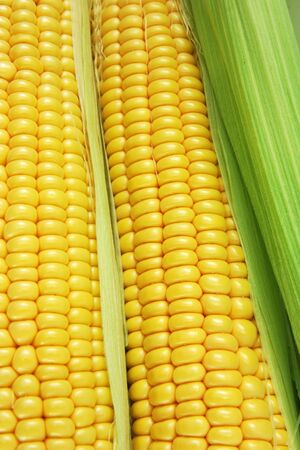 raw corn cob Stock Photo - 8603661