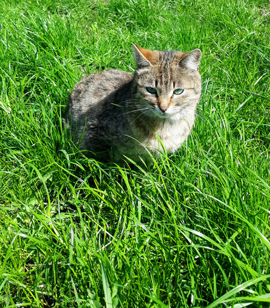 Tabby cat on grass