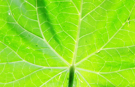 green leaf texture as background Stock Photo