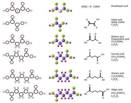 Molecules of dicarboxylic acid: oxalic acid, malonic acid, succinic acid, glutaric acid, adipic acid, pimelic acid