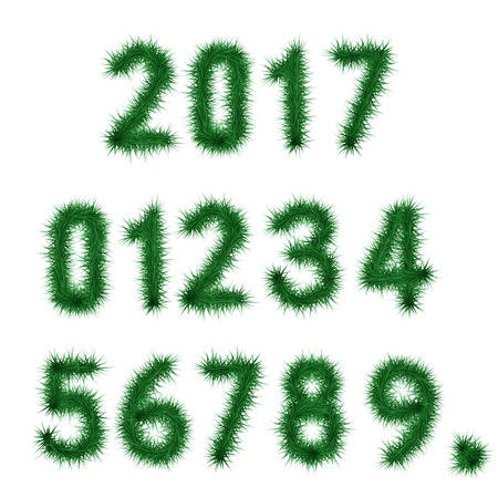six point: Collection of vector numbers decorated with dark green pine branches