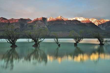Famous Floating Trees of Glenorchy, New Zealand photo