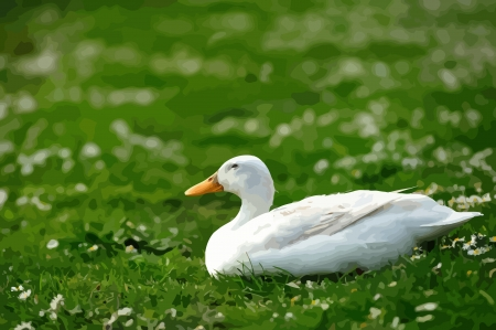 Illustration of duck resting on grass Illustration