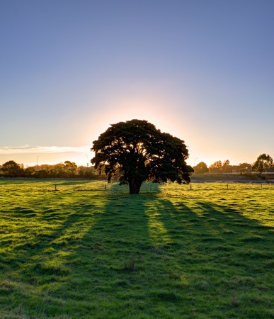 Lone tree obscuring sun during evening Stock Photo