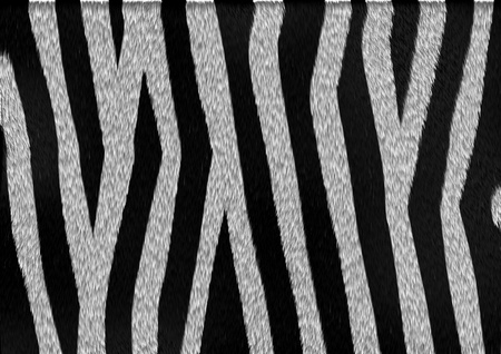 The texture and pattern of zebra skin and fur with black and white stripes Stock Photo - 21463583