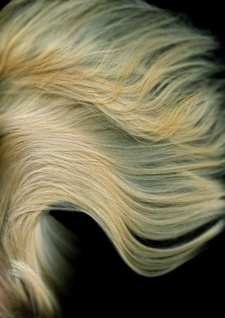 blonde long Hair is isolated on a black background