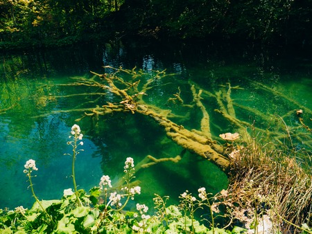 A snag in the water in the Plitvice Lakes National Park, Croatia. Waterfall in the forest. Stock Photo
