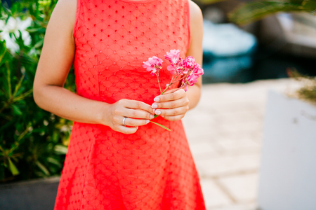The branch of oleander in the hands of a girl in a red dress Stock Photo