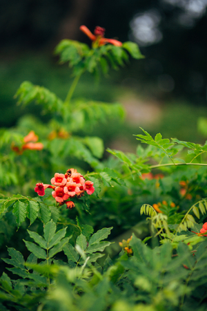 olive green: Flowers and plants in Montenegro. Montenegrin flora. Stock Photo