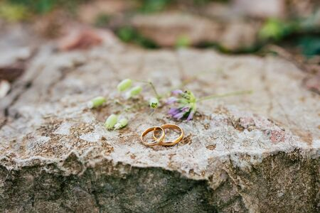 Wedding rings on the stones in the grass. Wedding in Montenegro. Фото со стока