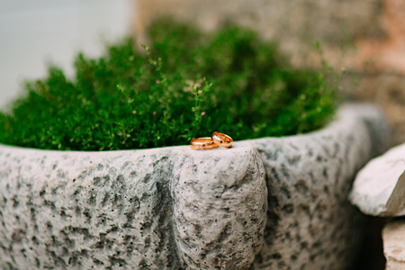 Wedding rings on the stones in the grass, among the greenery, leaves. Wedding jewelry.