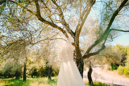 olive green: The brides dress hangs on a hanger on an olive tree. Collecting brides in an olive grove in Montenegro. Wedding in Europe.