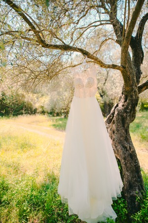 The brides dress hangs on a hanger on an olive tree. Collecting brides in an olive grove in Montenegro. Wedding in Europe.