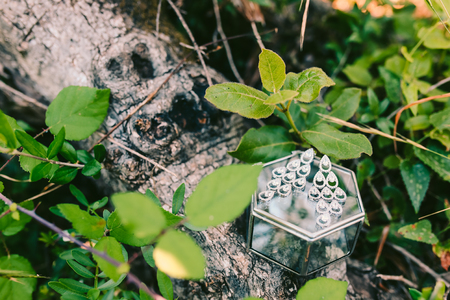 The brides earrings on a glass box lie on a tree in the forest.