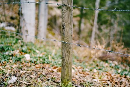 Barbed wire on a wooden fence against a backdrop of yellow leaves in the woods in March