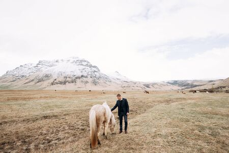 Destination Iceland wedding photo session with Icelandic horses. A guy in trousers, a sweater and a jacket strokes a cream-colored horse in the face and mane. Against the backdrop of a snowy mountain 版權商用圖片