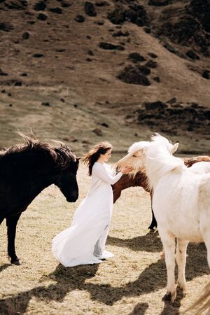 Destination Iceland wedding photo session with Icelandic horses. A bride in a white dress walks among a herd of horses in a field.