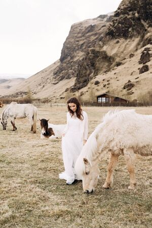 Bride in a white dress in a field with horses. Destination Iceland wedding photo session with Icelandic horses.
