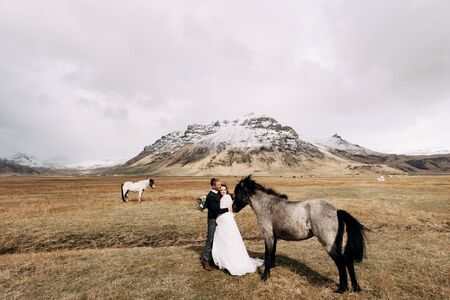 Wedding couple in after with horses. The groom hugs the bride. Destination Iceland wedding photo session with Icelandic horses.