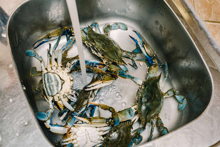 Live blue crabs in the kitchen sink. High quality photo