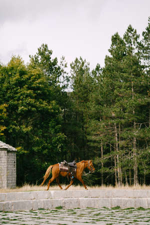 The brown horse goes against the green forest.