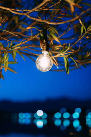 Retro garlands. Led-lamps overnight under a tree.