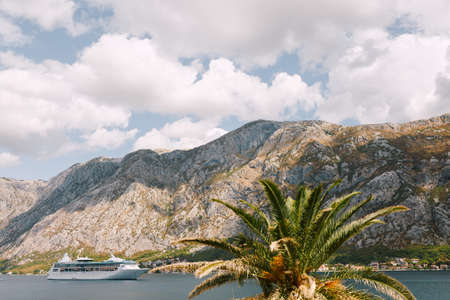 White cruise liner against the backdrop of rocky mountains. Moored ship near the cities of Dobrota and Ljuta. View of the mountains and the sea, through the date palm trees.