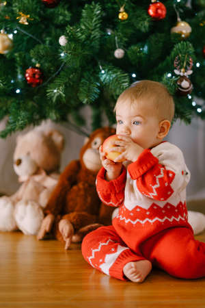 Baby in a red knitted bodysuit is eating an apple in front of a Christmas tree 스톡 콘텐츠