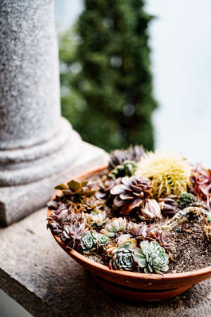 Clay pot with different succulents and cacti. Imagens - 156872420